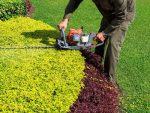 MCM Gardening Services Ltd